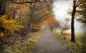 Пейзажи: осень, поле, дорога, деревья, лес, природа, туман