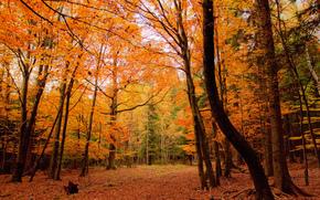 Природа: осень, лес, деревья, природа