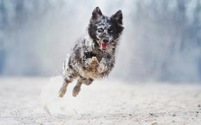 Животные: собака, бег, прыжок