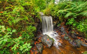 Природа: водопад, камни, растения, осень, природа