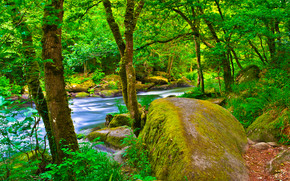 Природа: лес, река, деревья, камни, природа