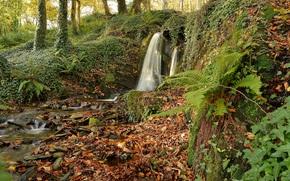 Природа: лес, деревья, водопад, камни, природа