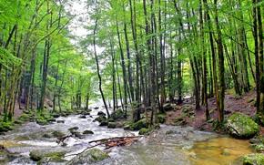 Природа: лес, река, камни, природа