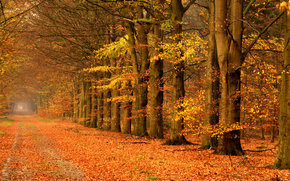 Пейзажи: осень, деревья, дорога, пейзаж
