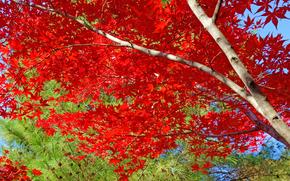 Природа: осень, деревья, природа