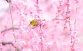 Макро: цветы, птица, макро