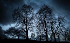 Пейзажи: ночь, деревья, тучи, пейзаж