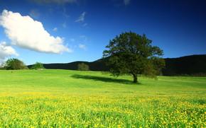Пейзажи: поле, цветы, дерево, пейзаж