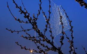 Макро: ветка, ночь, паутина, макро