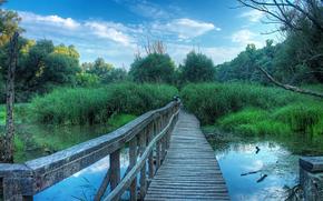 Пейзажи: болото, мост, деревья, пейзаж