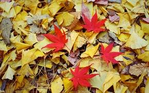 Природа: листья, осень, природа