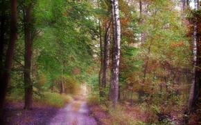 Природа: лес, дорога, деревья, природа