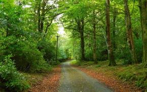 Пейзажи: лес, дорога, деревья, пейзаж