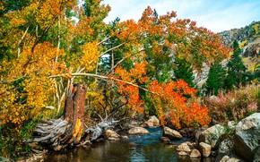 Пейзажи: осень, река, деревья, камни, пейзаж