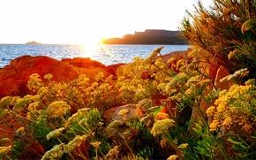 Пейзажи: море, берег, скалы, цветы, пейзаж