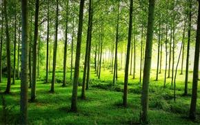 Природа: лес, деревья, природа