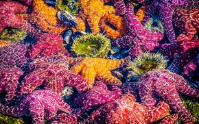 Животные: Раскрашенные Морские  звезды, Лагуна-Бич, Калифорния
