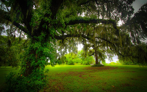 Природа: поляна, деревья, природа