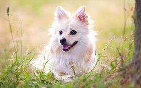 Животные: собака, животное, взгляд