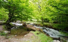 Природа: река, лес, деревья, природа