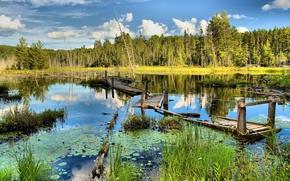 Пейзажи: заболоченная река, старый сломанный мост, деревья, пейзаж