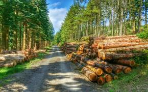 Пейзажи: лес, дорога, деревья, брёвна, пейзаж