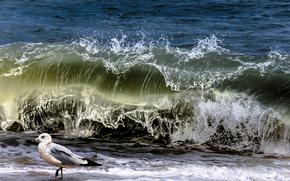 Природа: море, волны, чайка, природа