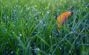 Макро: трава, роса, капли, макро