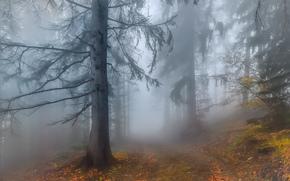 Пейзажи: осень, лес, дорога, туман, деревья, пейзаж
