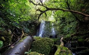 Природа: лес, водопад, деревья, камни, мох, природа