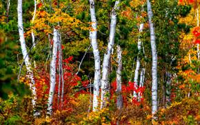 Природа: осень, лес, деревья