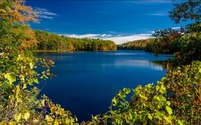 Пейзажи: Rockwood Lake, Adirondack Park, New York, озеро Роквуд, Парк Адирондак, штат Нью-Йорк, осень, озеро, деревья, ветки