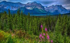Пейзажи: Hector Lake, Waputik Range, Canadian Rockies, Jasper National Park, Alberta, Canada, озеро Гектор, хребет Вапутик, Скалистые горы, Национальный парк Джаспер, Альберта, Канада, горы, лес