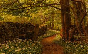 Пейзажи: Silverdale, Lancashire, England, Силвердейл, Ланкашир, Англия, лес, тропинка, деревья, цветы