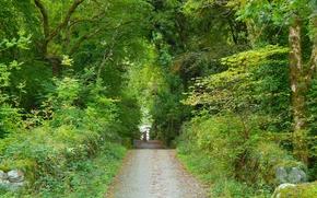 Пейзажи: лес, парк, деревья, дорога, пейзаж