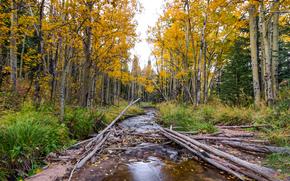 Природа: лес, деревья, река, природа