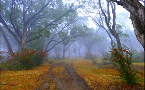 Пейзажи: осень, дорога, деревья, туман, пейзаж