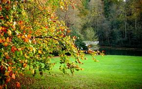 Пейзажи: Hampstead Heath, London, поле, осень, деревья, мост, пейзаж