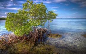 Пейзажи: мангровое дерево, море, пейзаж
