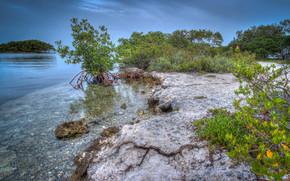 Пейзажи: мангровые леса, море, пейзаж