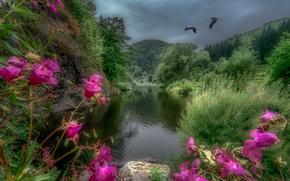 Пейзажи: river Kamp, Austria, река, горы, деревья, журавли, пейзаж