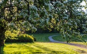Природа: Sweden, Швеция, весна, дерево, цветение, цветки