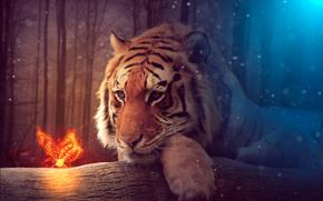 Рендеринг: тигр, взгляд, бабочка, сюрреализм, фантасмагория, 3d, art