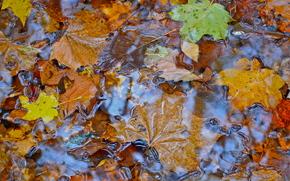 Природа: осень, листья, вода, природа
