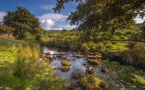 Пейзажи: Burbage Brook, Padley Gorge, Longshaw Estate, Peak District National Park, Derbyshire, England, река Бербэдж Брук, Пик-Дистрикт, Дербишир, Англия, река, речка, деревья