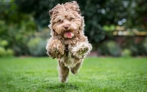 Животные: собака, бег, радость, настроение, лужайка