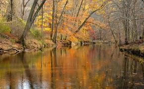 Природа: осень, река, лес, деревья, природа