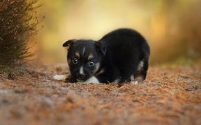 Животные: собака, щенок, малыш