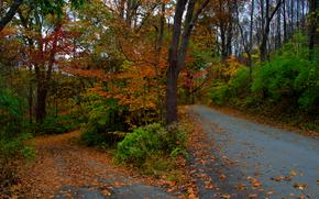 Пейзажи: осень, лес, деревья, дорога, пейзаж