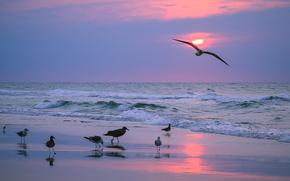 Пейзажи: закат, море, волны, берег, чайки, пейзаж